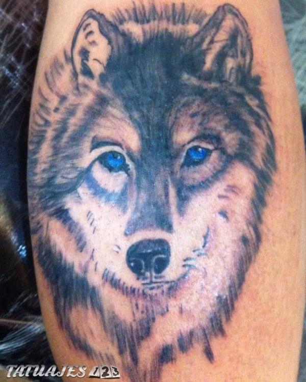 1er lobo realizado