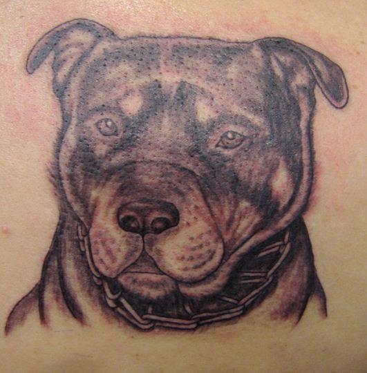 Perros con Collar
