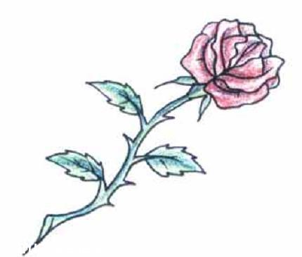 rosa-roja.jpg