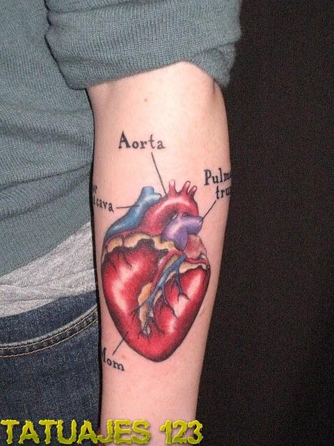 Tatuaje partes del corazón - Tatuajes 123