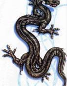 Dragón lagartija 3D