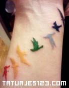 Pájaros arco iris