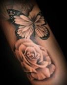 La mariposa y la rosa