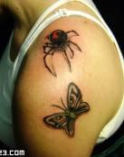 Mariposa y araña