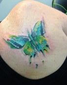 Mariposa bicolor