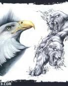 Cabeza de águila imperial