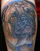 Un perro de la raza Carlino
