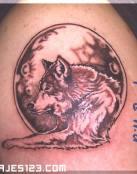 Lobo tumbado y luna llena rojiza