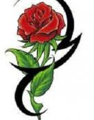 Rosa roja entre tribales